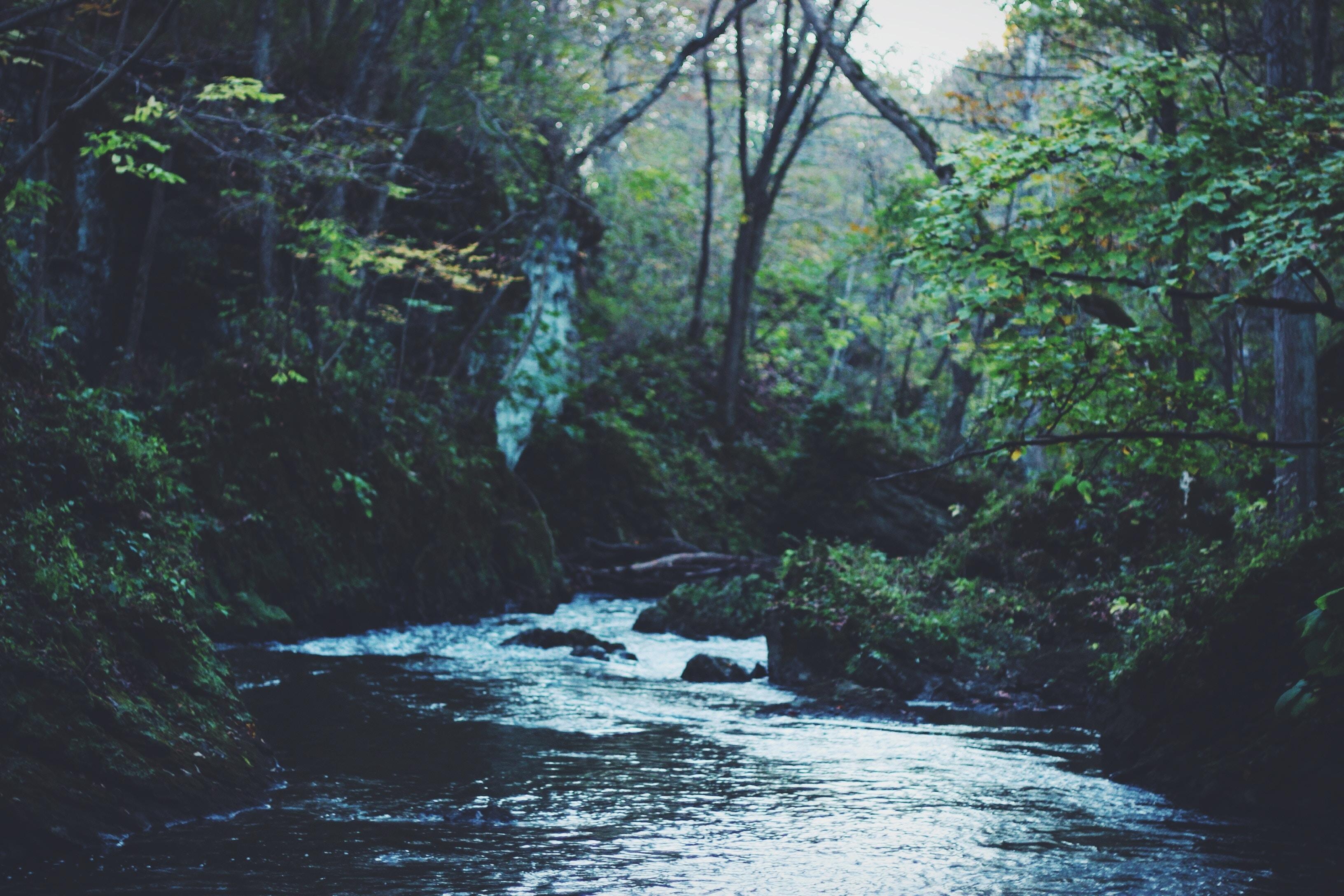 Overlevelsestips for deg i naturen. Tom for vann?