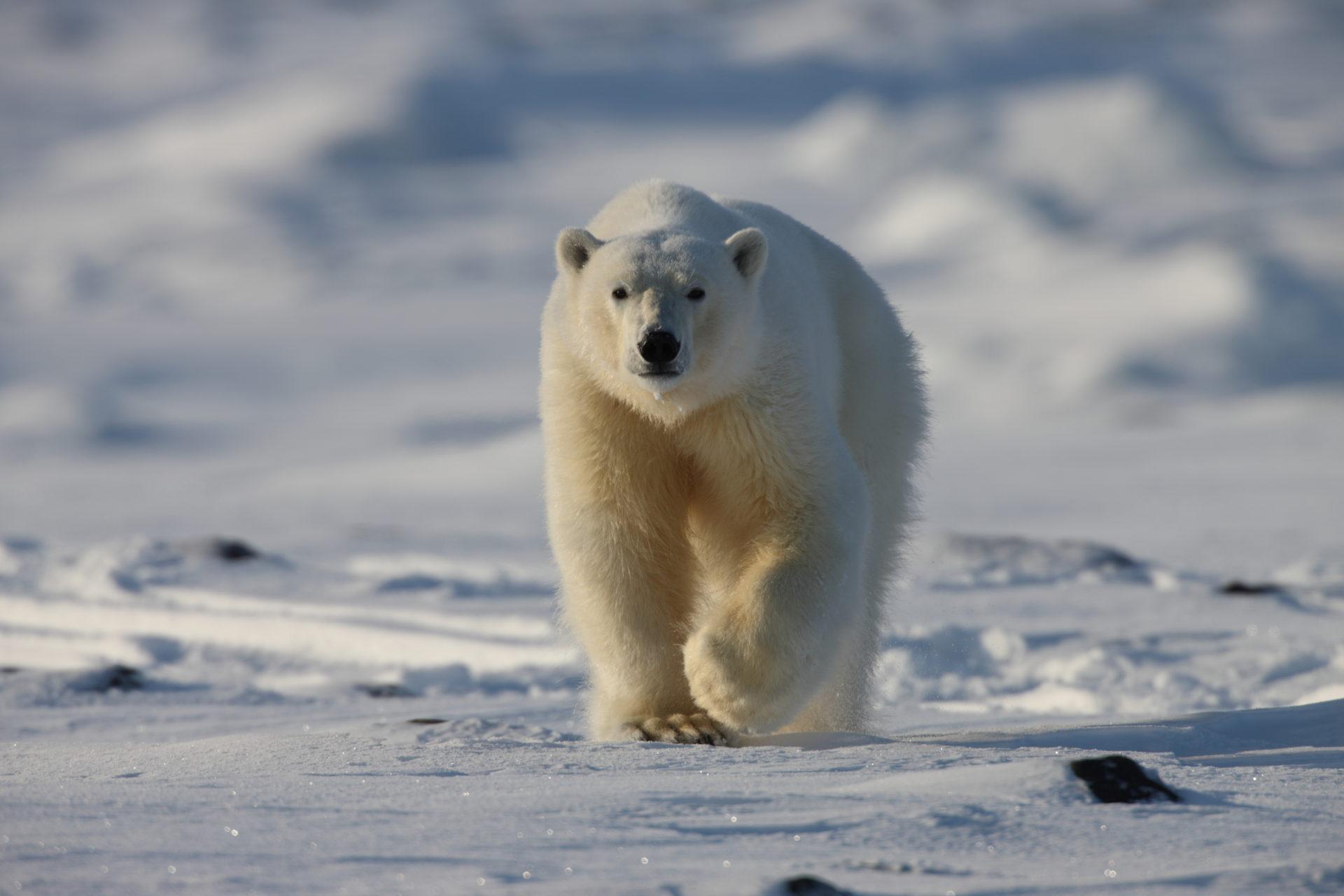 Ting du må gjøre på Svalbard!