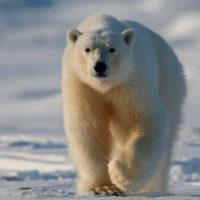 Svalbard_01